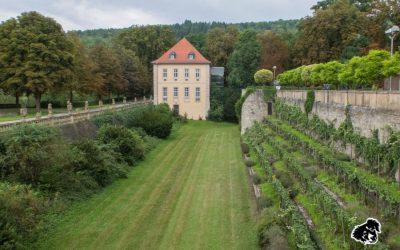 I vigneti della Franconia da Bad Mergentheim a Weikersheim